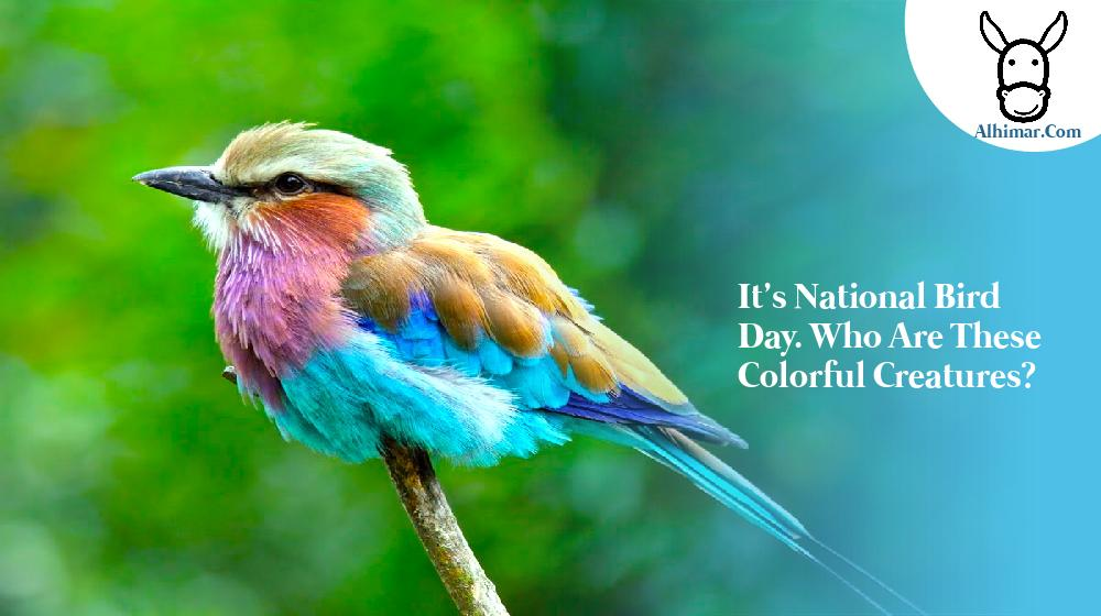 It's National Bird Day. Who are these colorful creatures?