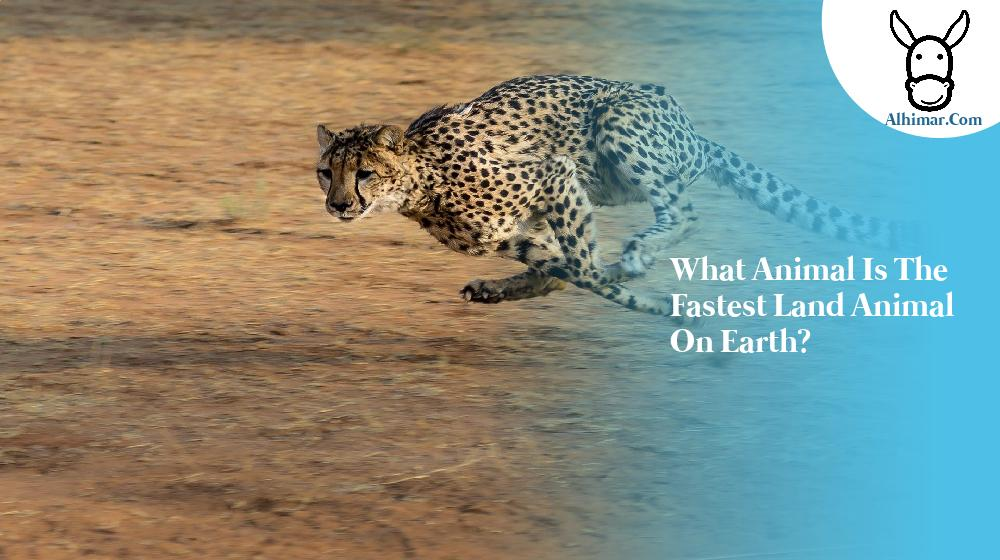 What animal is the fastest land animal on earth?