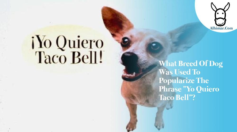 """What breed of dog was used to popularize the phrase """"Yo quiero Taco Bell""""?"""