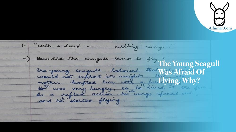 the young seagull was afraid of flying. why?