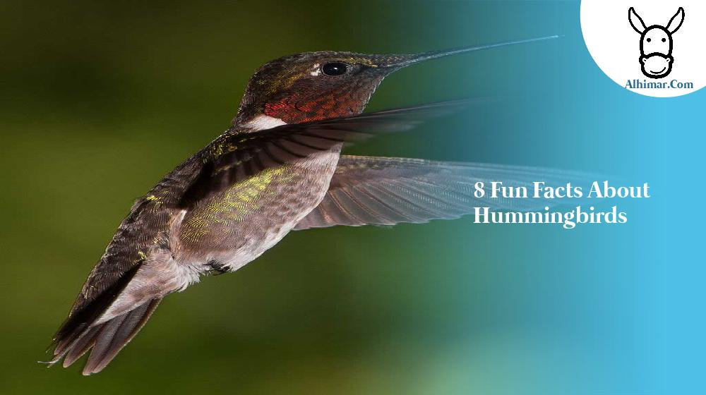 8 Fun facts about Hummingbirds