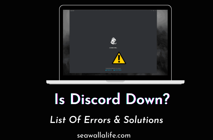 Is Discord Down? Possible Errors & Solutions
