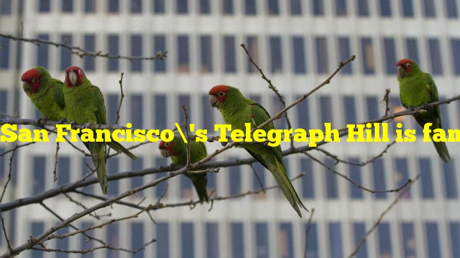 San Francisco's Telegraph Hill is famously home to what wild animals?
