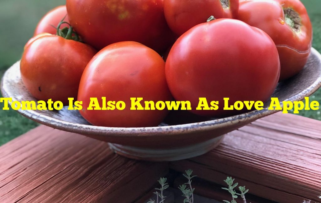 Tomato Is Also Known As Love Apple Unanswered