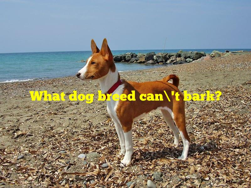 What dog breed can't bark?