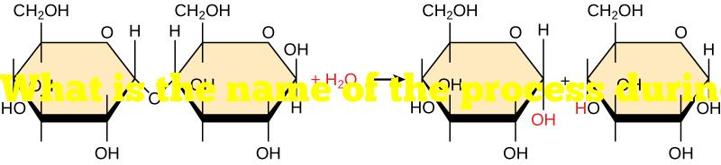 What is the name of the process during which a bond between two monomers is broken?