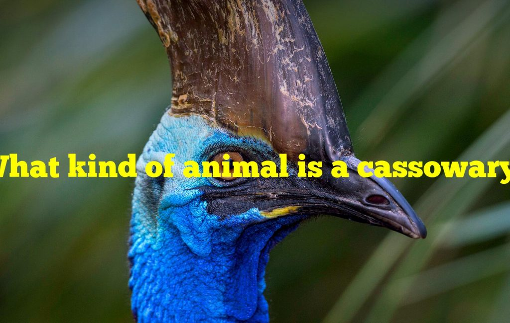 What kind of animal is a cassowary?