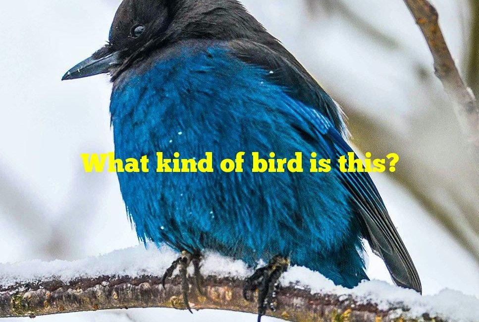What kind of bird is this?