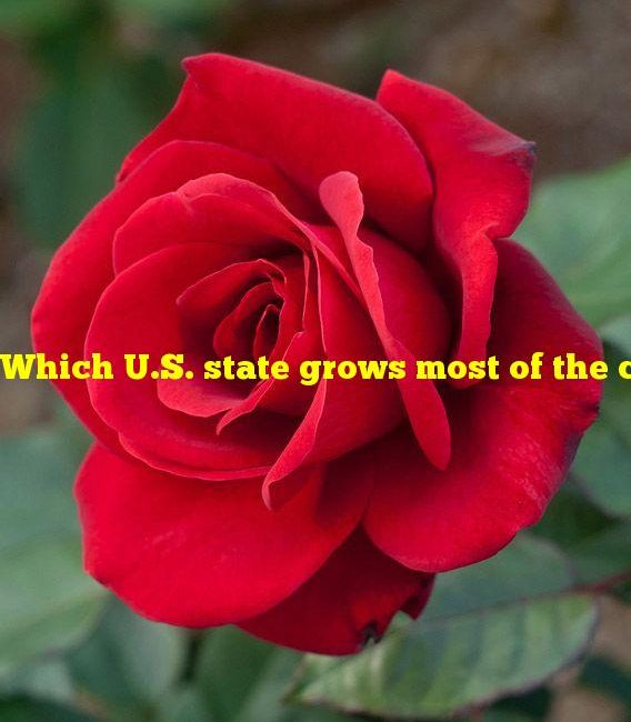 Which U.S. state grows most of the country's red roses?