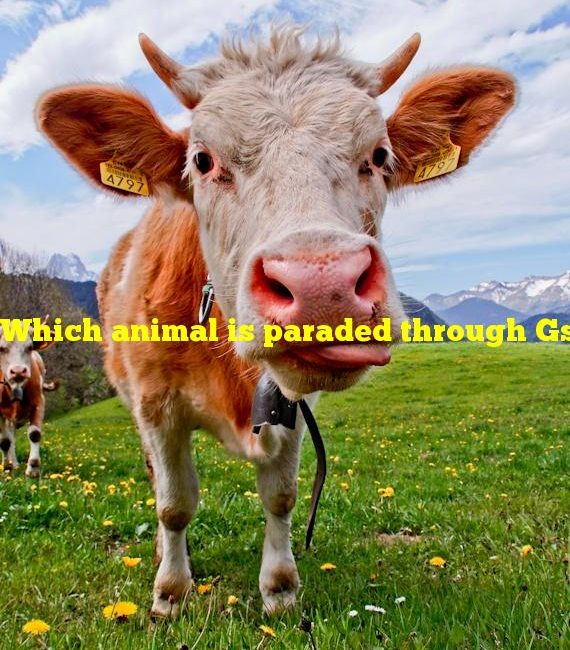 Which animal is paraded through Gstaad, Switzerland at the end of summer?