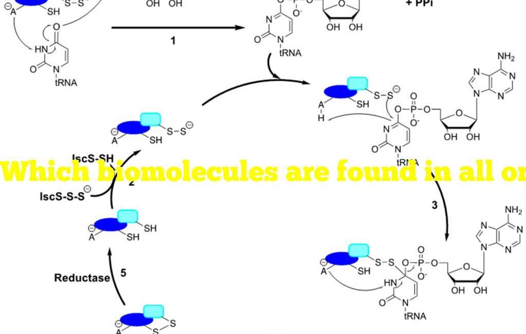 Which biomolecules are found in all organisms?