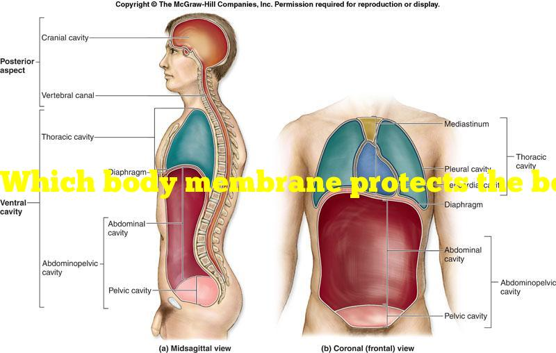 Which body membrane protects the body from water loss and harm to internal organs?
