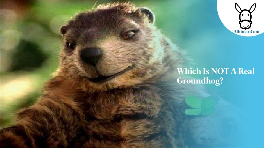 Which is NOT a real groundhog?