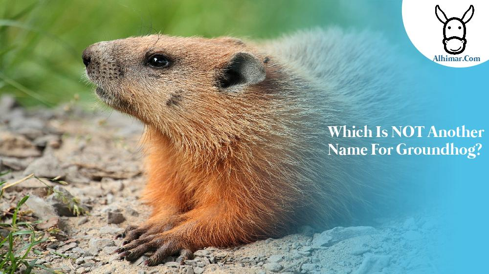 Which is NOT another name for groundhog?