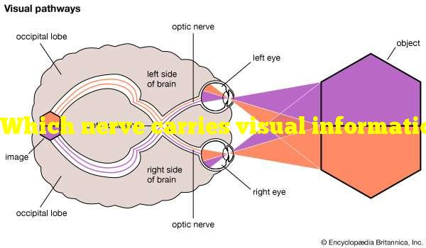 Which nerve carries visual information from the retina to the brain?