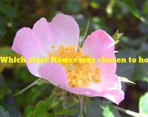Which state flower was chosen to honor pioneer women?