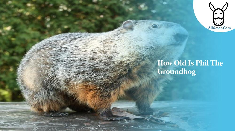 how old is phil the groundhog
