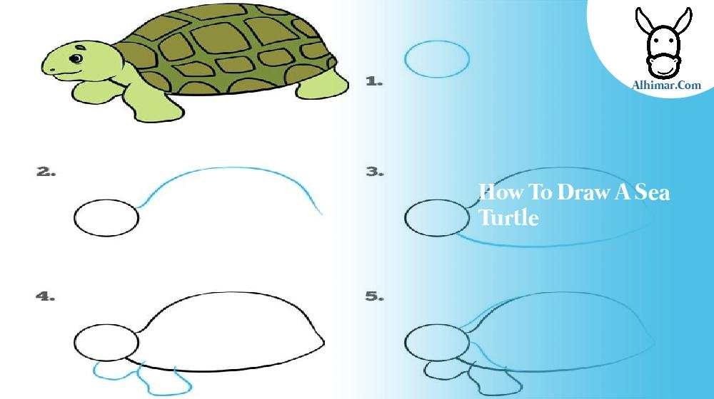 how to draw a sea turtle
