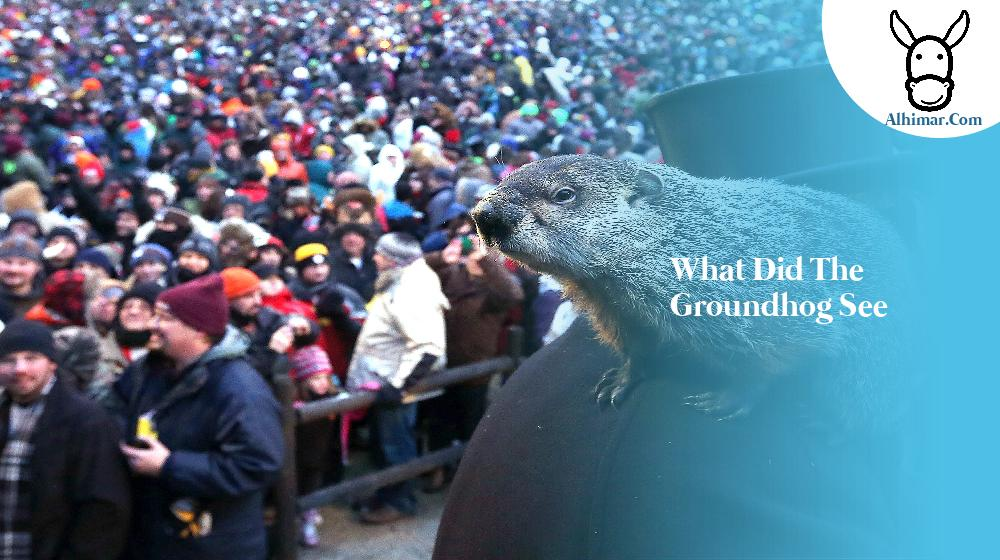 what did the groundhog see