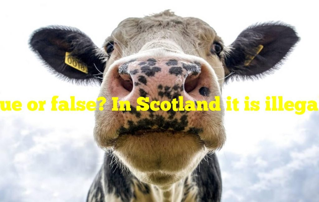 True or false? In Scotland it is illegal to be drunk and in charge of a cow.