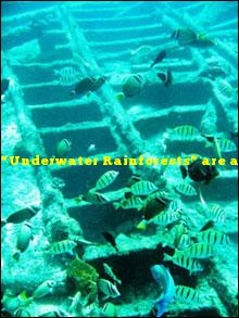 """""""Underwater Rainforests"""" are another name for what marine ecosystem?"""