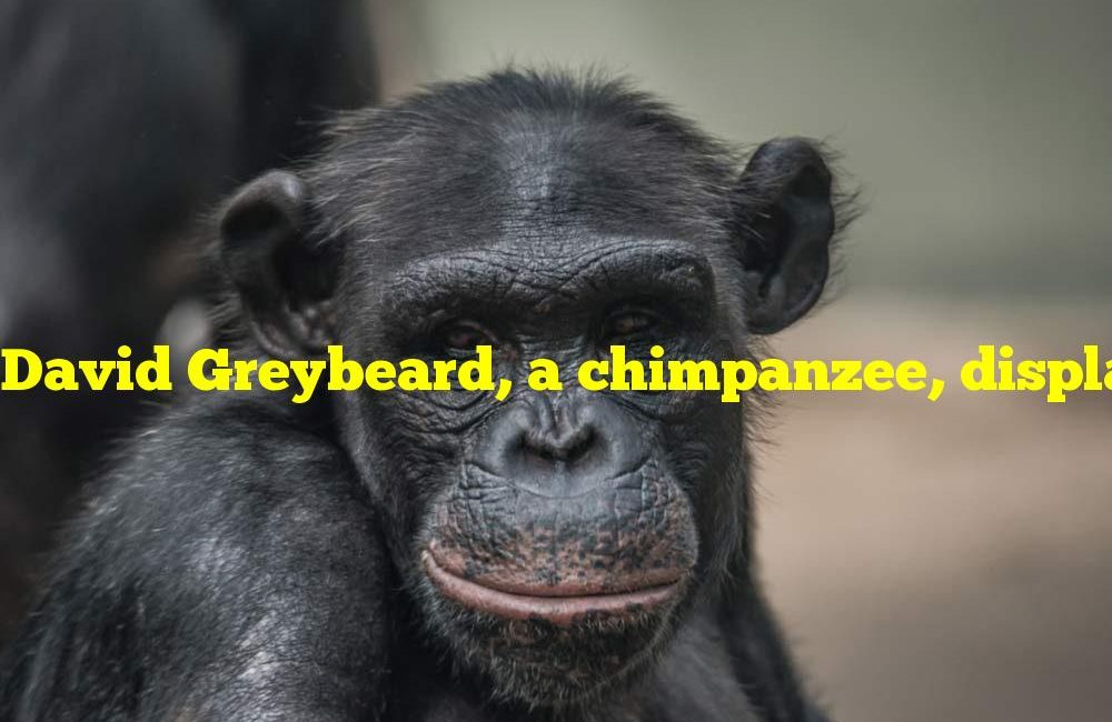 David Greybeard, a chimpanzee, displayed intelligence to what scientist?