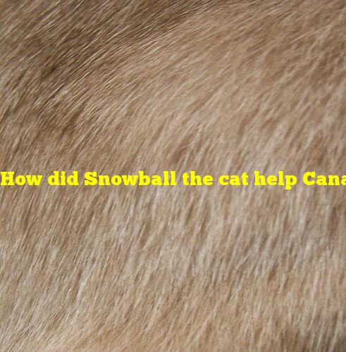 How did Snowball the cat help Canadian detectives solve a murder?