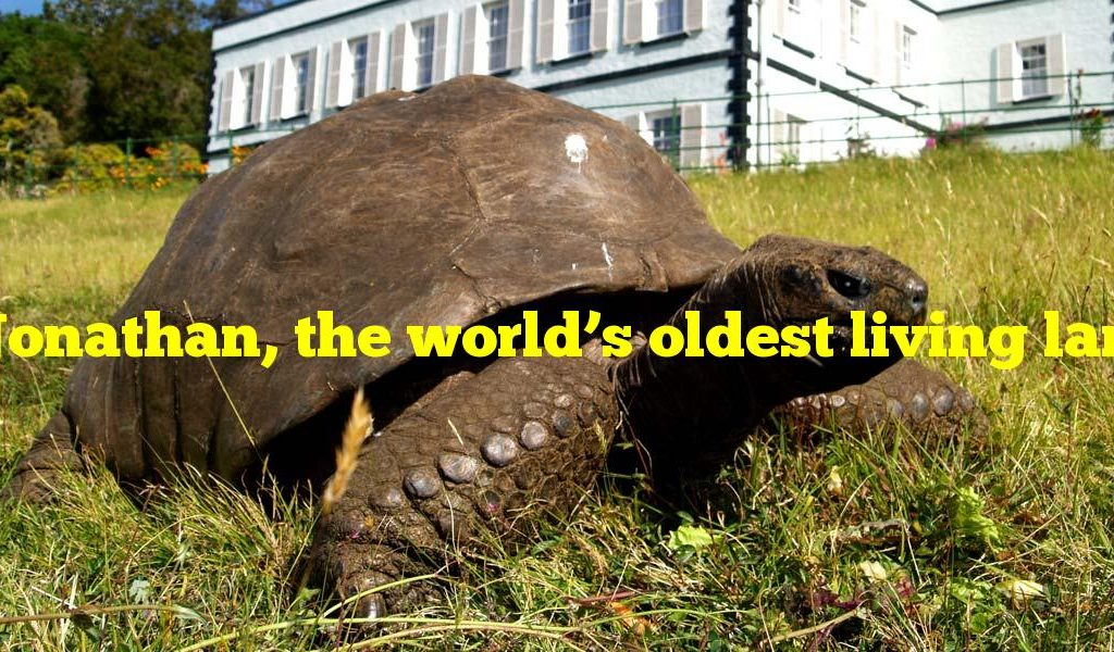 Jonathan, the world's oldest living land animal, is what?