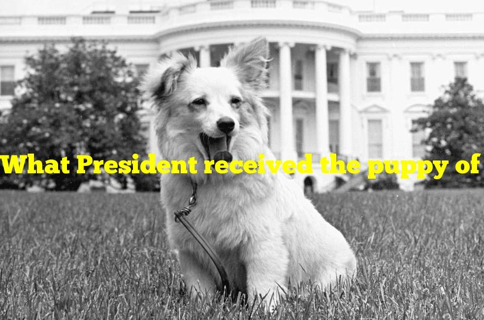 What President received the puppy of a dog who went to space as a gift?