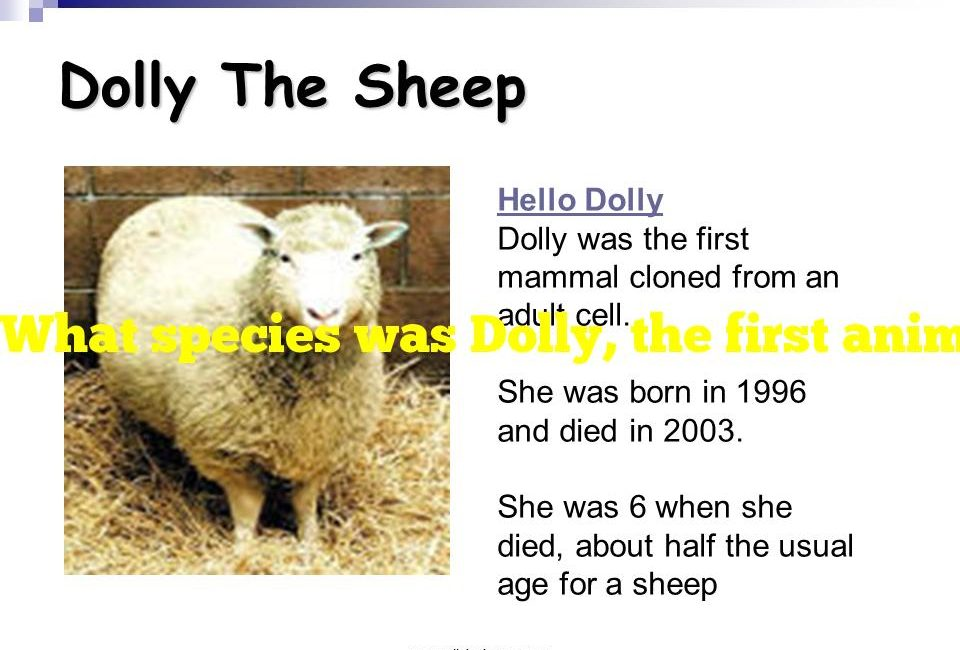 What species was Dolly, the first animal to be cloned from adult cells?