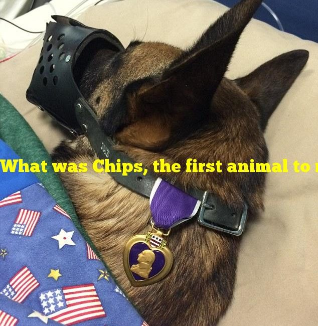 What was Chips, the first animal to receive the Purple Heart?