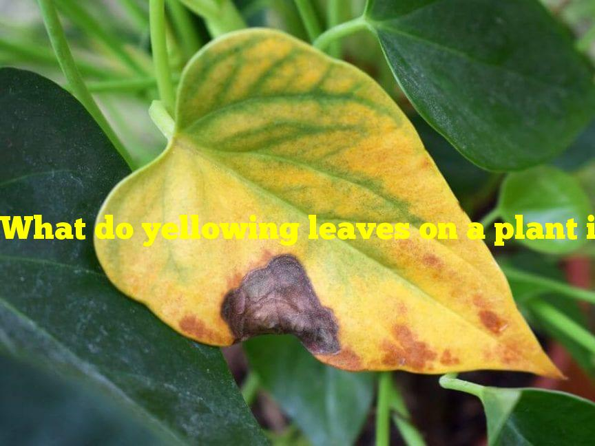 What do yellowing leaves on a plant indicate?