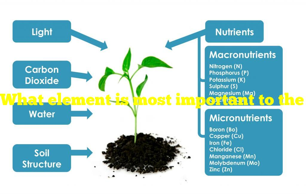 What element is most important to the growth of a houseplant?