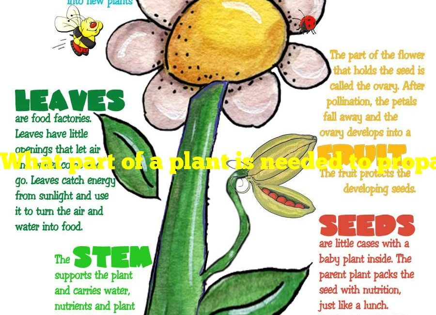 What part of a plant is needed to propagate a new plant?