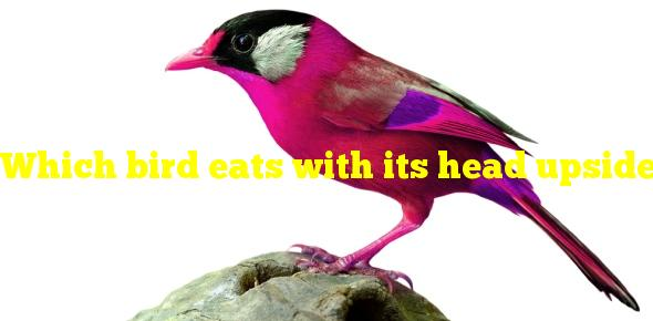 Which bird eats with its head upside down?